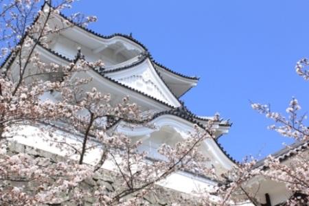 忍者の里と桜
