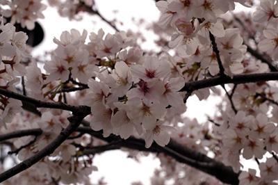 春・咲きました♪